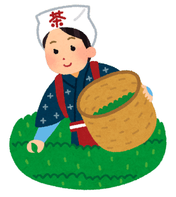 茶摘みのイラスト