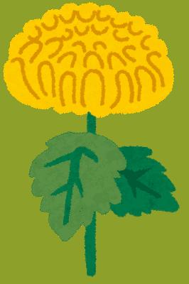菊のイラスト「黄色い菊」